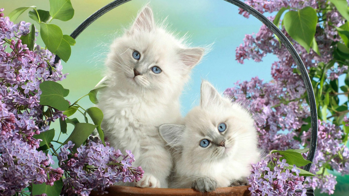 Two adorable kittens surrounded by lilacs