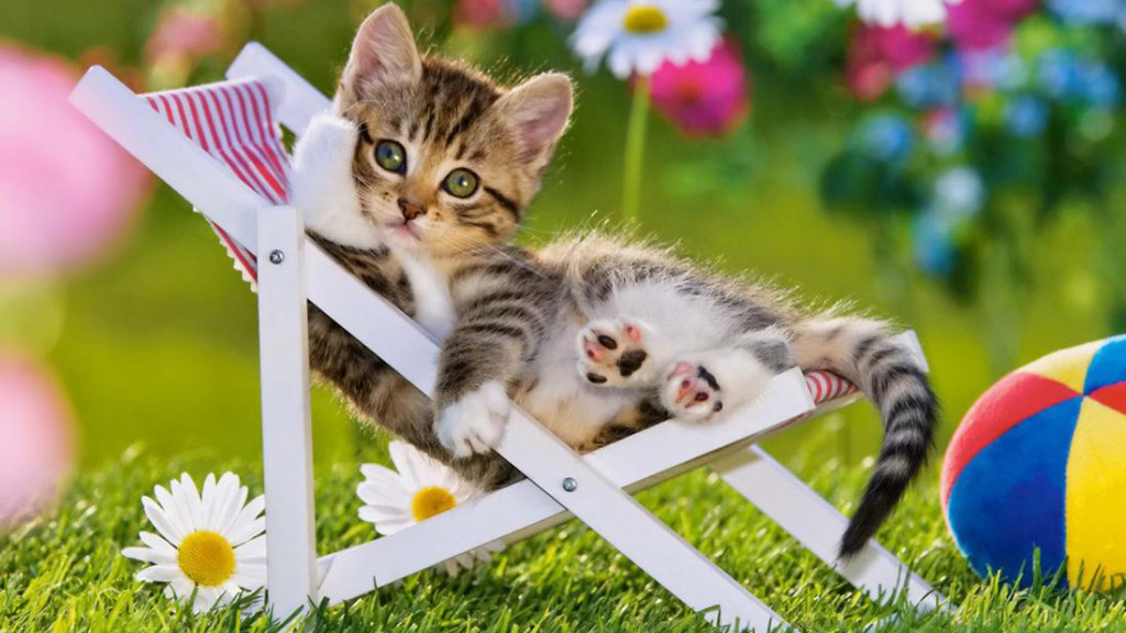 Tabby kitten relaxing in a beach chair
