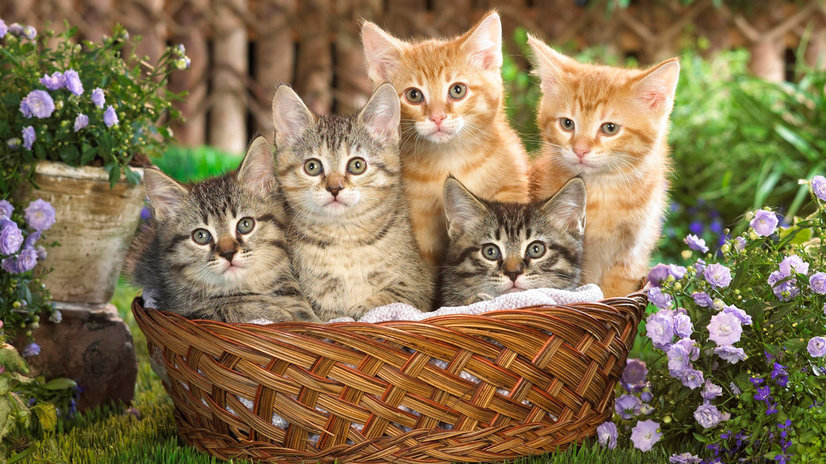A basket of five tabby kittens sitting in a garden