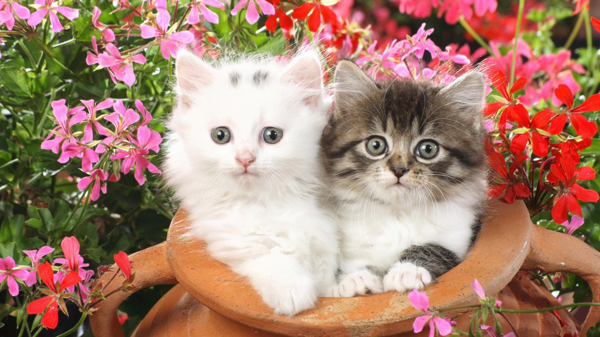 Two concerned looking kittens sitting in a flower pot surrounded by red and pink flowers